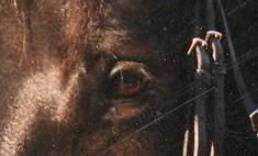 Ami's schöne Augen