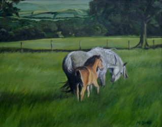 Mare and Foal, grazing in North Yorkshire countryside