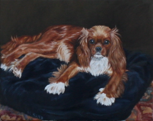 Dog portrait in oil of Cavalier King Charles, Ruby