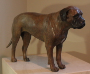 Bull Mastif in bronze, commissioned by owner