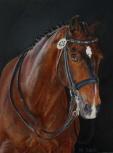 Pferd Porträt in Öl von Dressurpferd Levin